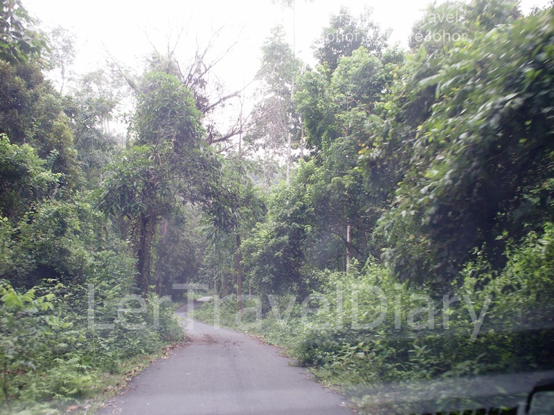 4) You will see oil palm plantation around you as you drive down the road.