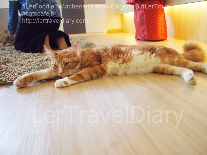 cats_cafe_lertravel_JB_030